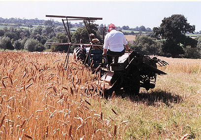 straw being cut with the binder